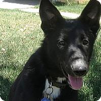 Adopt A Pet :: Sassy - VIDEO - Monrovia, CA
