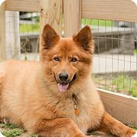 Adopt A Pet :: Alf - Wappingers, NY