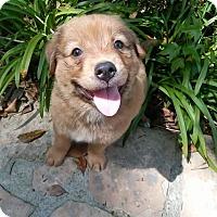 Adopt A Pet :: Milo - Humble, TX