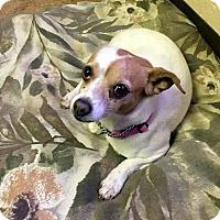 Adopt A Pet :: CHEECH - Hurricane, UT