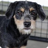 Adopt A Pet :: Celia - Picayune, MS