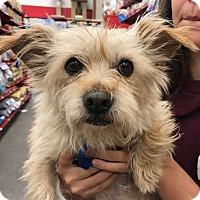Adopt A Pet :: Francis - Studio City, CA