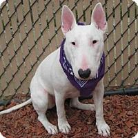 Adopt A Pet :: *ZOE - Norco, CA