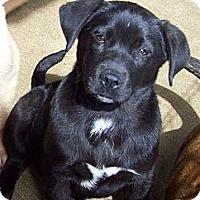 Adopt A Pet :: DANICA - Glastonbury, CT