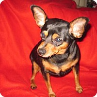 Adopt A Pet :: CHEETOS - Minnetonka, MN