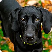 Adopt A Pet :: Maggie Mae - Randolph, NJ