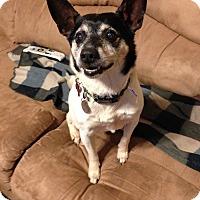 Adopt A Pet :: Jericho - Knoxville, TN