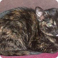 Adopt A Pet :: KiNDRA - Acme, PA