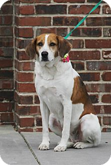 Hound (Unknown Type) Mix Dog for adoption in Mount Pleasant, South Carolina - Teri