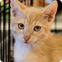 Adopt A Pet :: Anna - Gilbert, AZ