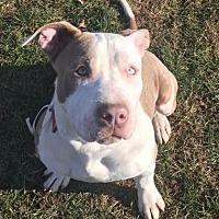 Adopt A Pet :: Sully - Bay Shore, NY
