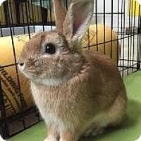 Adopt A Pet :: Bowie - Woburn, MA
