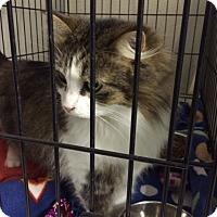 Adopt A Pet :: Tink - Byron Center, MI