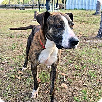 Adopt A Pet :: HUNTER - Palm City, FL