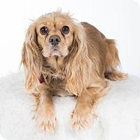 Adopt A Pet :: Reba - St. Louis Park, MN
