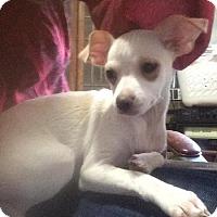 Adopt A Pet :: Ashley - Libertyville, IL