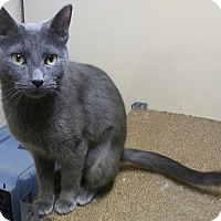 Adopt A Pet :: Gypsy - Hazel Park, MI