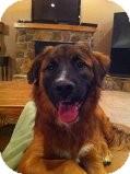 Shepherd (Unknown Type)/Retriever (Unknown Type) Mix Dog for adoption in Russellville, Kentucky - Josie