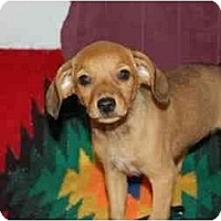 Adopt A Pet :: Annie - Chula Vista, CA