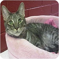 Adopt A Pet :: Gage - Phoenix, AZ