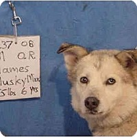 Adopt A Pet :: James/Adopted! - Zanesville, OH