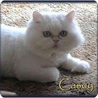 Adopt A Pet :: Casey - Beverly Hills, CA