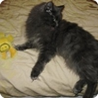 Adopt A Pet :: Whimsey - Vancouver, BC