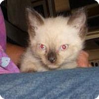 Adopt A Pet :: Gypsy - Dallas, TX