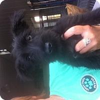 Adopt A Pet :: Regan - Brazil, IN