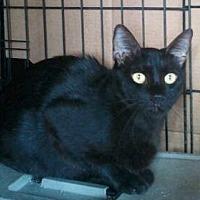 Adopt A Pet :: Blackie - Beaumont, TX