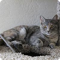 Adopt A Pet :: Tillie - Fountain Hills, AZ