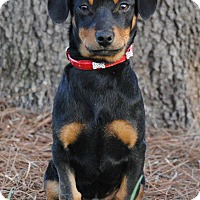 Adopt A Pet :: Stevie - Cedartown, GA