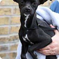 Adopt A Pet :: Pepe - Princeton, MN