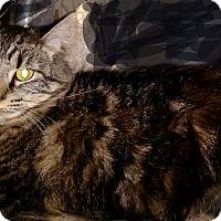 Adopt A Pet :: Jude - Modesto, CA