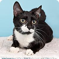 Adopt A Pet :: Fallon - Wilmington, DE