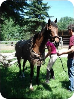Thoroughbred Mix for adoption in Northford, Connecticut - Buddy (adopted)