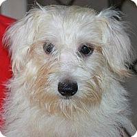 Adopt A Pet :: Sophia - Temecula, CA