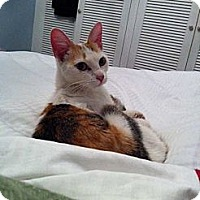 Adopt A Pet :: Annie Too - Laguna Woods, CA