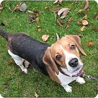 Adopt A Pet :: Marilyn - Blairstown, NJ