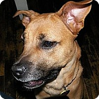 Adopt A Pet :: Cranberry - Hancock, MI