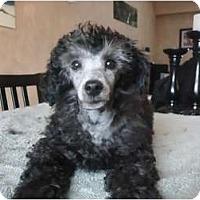 Adopt A Pet :: CharlieADOPTED! - Toronto/Etobicoke/GTA, ON