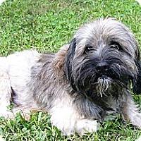 Adopt A Pet :: Roscoe - Mocksville, NC