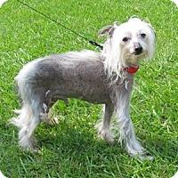 Adopt A Pet :: Rory (AL) - Gilford, NH