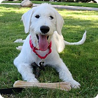 Adopt A Pet :: Frosty - Santa Ana, CA