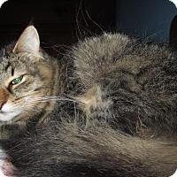 Adopt A Pet :: Nattie - Leamington, ON