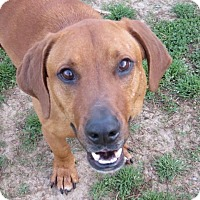 Adopt A Pet :: Billy - in New England - kennebunkport, ME