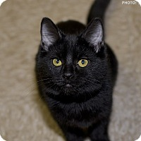 Adopt A Pet :: Dancer - Medina, OH