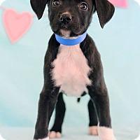 Adopt A Pet :: Terrin - Waldorf, MD