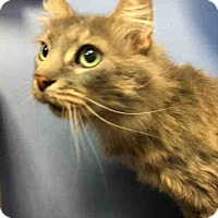 Adopt A Pet :: EARL GRAY - Canfield, OH