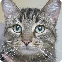 Adopt A Pet :: Edie - Menomonie, WI